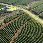 WWF: il caffè causa della deforestazione