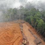 Studio: la fame occidentale di caffè tra le prime cause di deforestazione